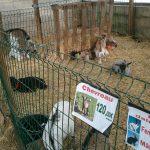 Les animaux sous l'abris