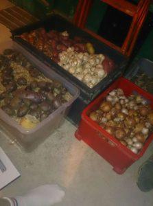 le stockage des légumes