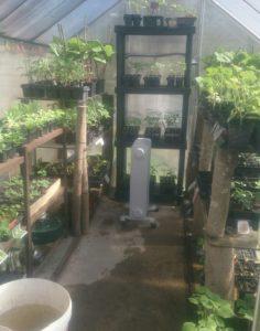 mes semis 2018 (plants gratuit)