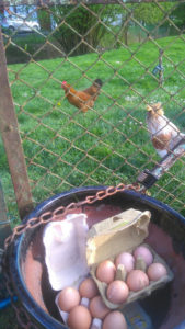 des boites à œufs dans un pot