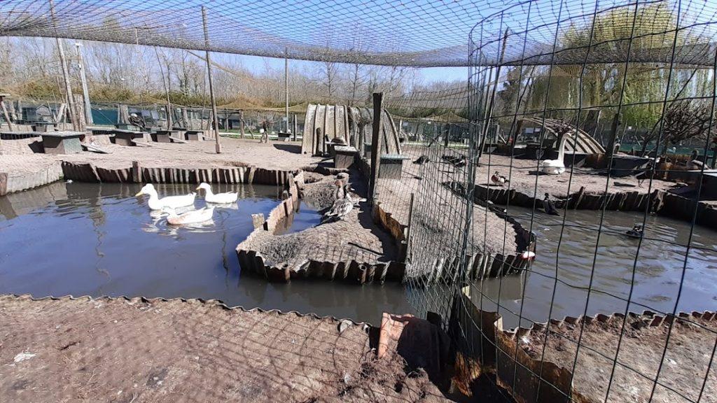 des enclos des palmipèdes avec coin d'eau